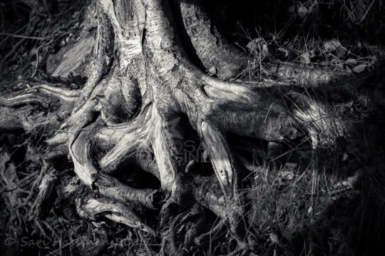 Juuret / Roots